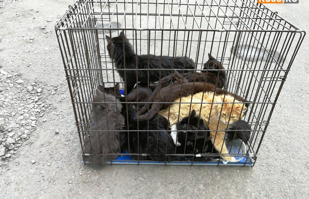 Жителей Обнинска приглашают на выставку-раздачу котят и щенят