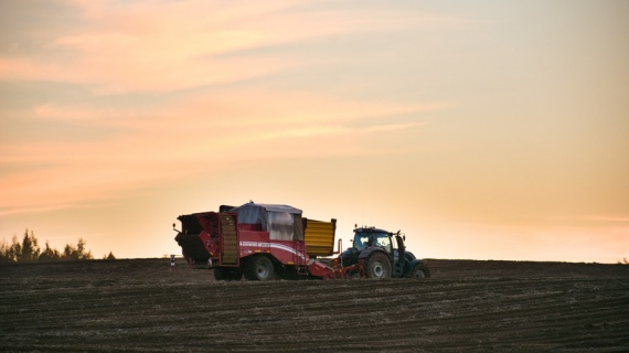 Первыми урожай стали собирать аграрии Серебряных Прудов, Зарайска и Луховиц
