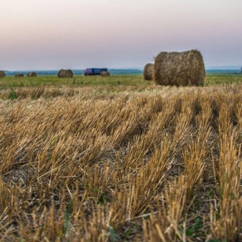 Почти 200 га изъятой в Подмосковье сельхозземли нашли новых хозяев в 2021 году