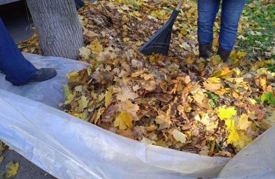 В Коломне начали убирать опавшую листву